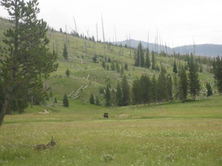 Grazing in the Meadow - Sheep Mesa Outfitters