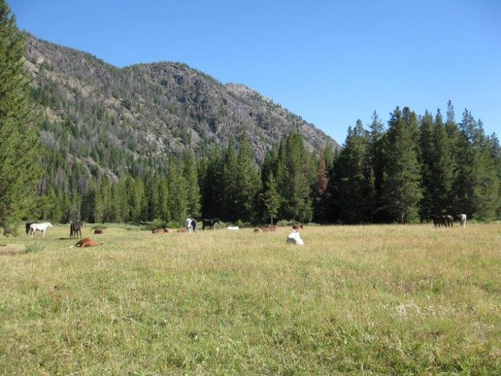 Horses & Mules Relaxing in the Meadow