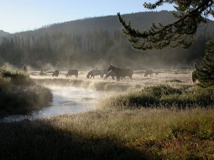 Basin Creek Camp Early Morning Mist