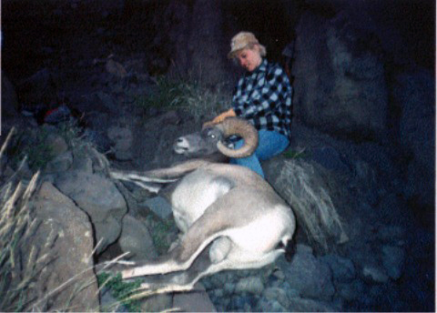 Big Horn Sheep Mesa Outfitters