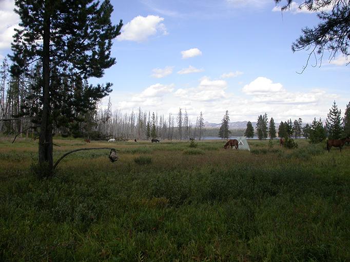 Yellowstone Lake Meadow